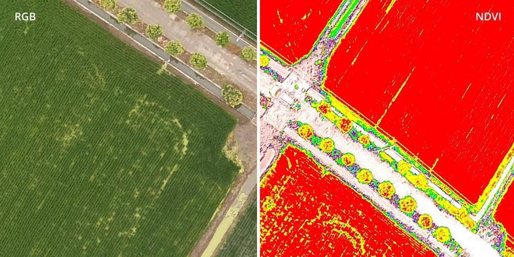Изображения, полученные с RGB- и мультиспектральных камер DJI Phantom 4 Multispectral