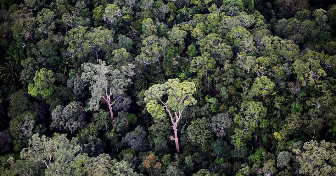 Применение дронов DJI для защиты лесов Амазонии