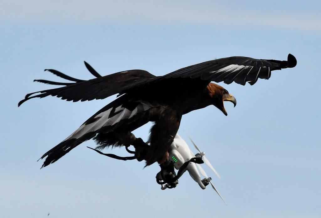 Как избежать столкновения дрона с птицами