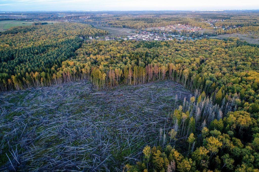 Гигантские проплешины посреди лесного массива как результат нелегальной вырубки
