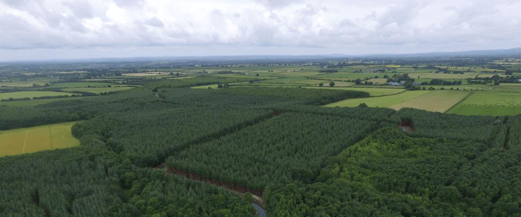 Беспилотники помогают лесам: успешный зарубежный опыт