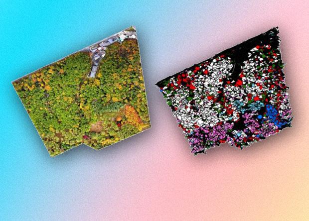 Использование беспилотников и нейросети для создания цифровой модели леса